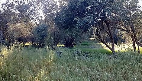 Οικόπεδο στην περιοχή Ποσειδώνιο Σάμου